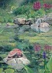 L'étang et la tortue