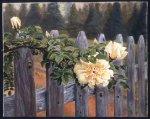 Vermont Rose