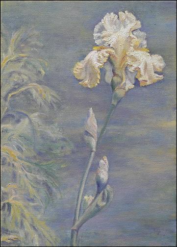 daphnes-white-iris