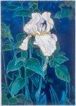 L'iris blanc