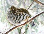 Partridge, 18 x14